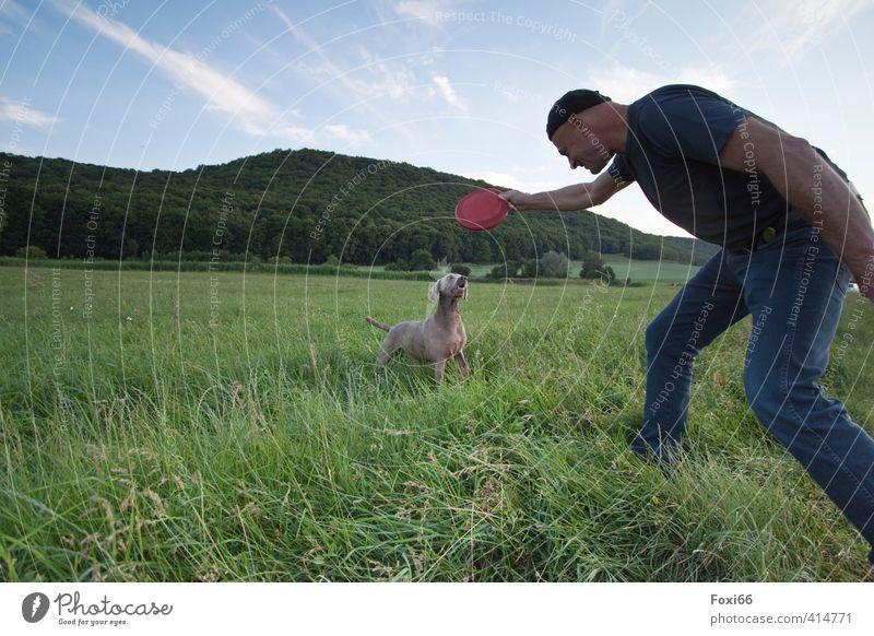 eingespieltes Team Fitness Sport-Training Jagd Frisbee maskulin Freundschaft Körper 1 Mensch Landschaft Himmel Wolken Sommer Gras Wiese Tier Haustier Hund