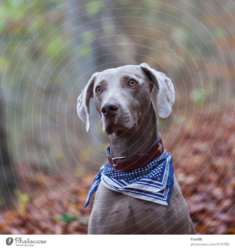 für Tia ---Welthundetag Hund blau grün rot Tier Wald Umwelt Bewegung Herbst Spielen natürlich Gesundheit braun glänzend laufen frei