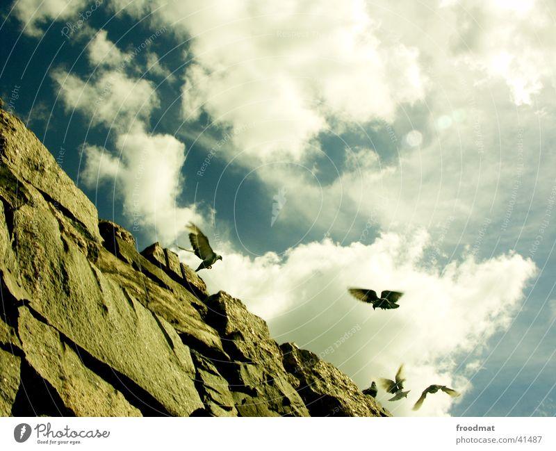 Himmel über Helsinki (mit Tauben) Finnland Wolken Vogel Europa Felsen fliegen Stein