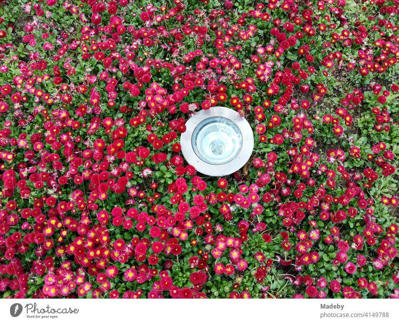 Moderner runder Scheinwerfer in einem Blumenbeet mit Hunderten roter Blüten in einem Park in Bursa in der Türkei Beet Rot Blütenmeer Lampe Leuchte Strahler