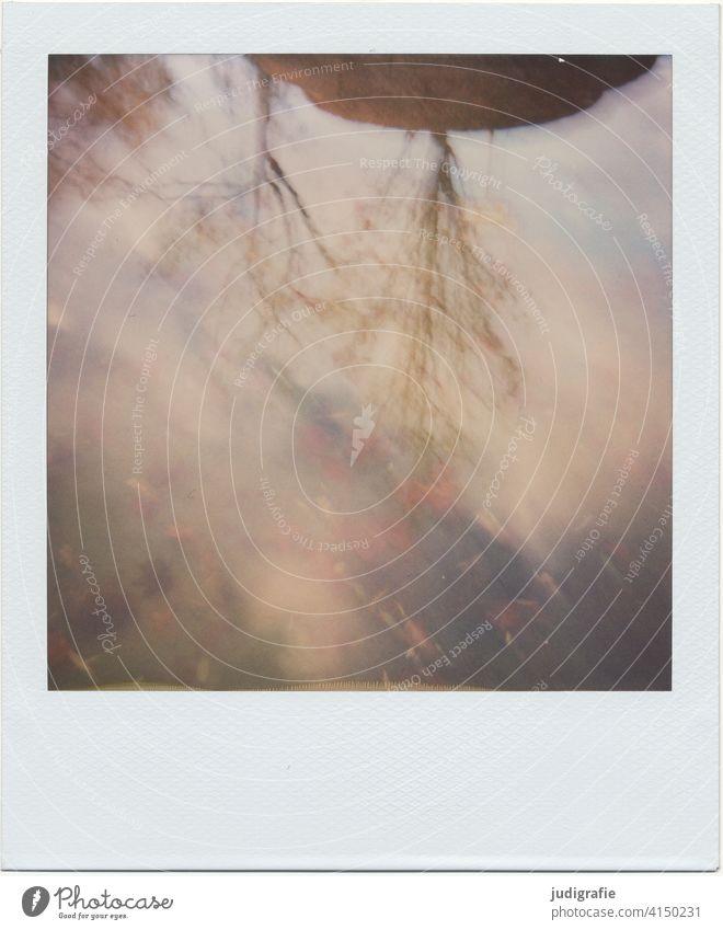 In Pfütze gespiegelte Baumkronen auf Polaroid Spiegelung Herbst Wolken Reflexion & Spiegelung Wasser Himmel Blatt Natur Regen nass Wetter schlechtes Wetter