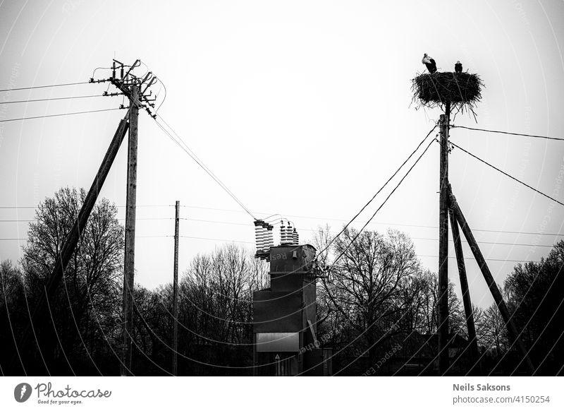 Eine Storchenfamilie, die auf einem Nest lebt, das sie auf einem Strommast in einer ländlichen Gegend in Lettland gebaut hat. Wilde Tiere, die zwischen Menschen leben.