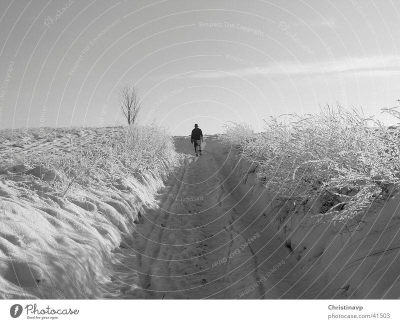 Hohlweg weiß Winter Einsamkeit Schnee Wege & Pfade Landschaft Spaziergang