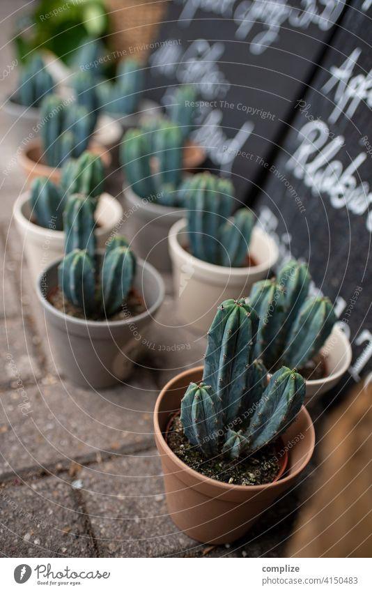 Sommer Sonne Kaktus Verkauf verkaufsstand Blumenladen Vase Blumentopf kaktuspflanze viele Schild Pflanze Topfpflanze