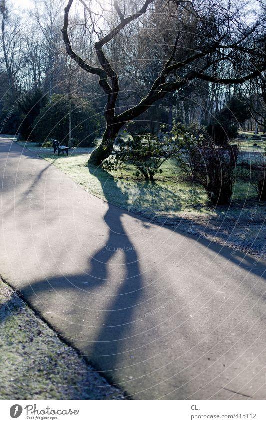 baum Umwelt Natur Landschaft Herbst Winter Schönes Wetter Baum Park Wachstum groß ruhig Traurigkeit Einsamkeit Kraft Tod Trauer Vergänglichkeit verlieren