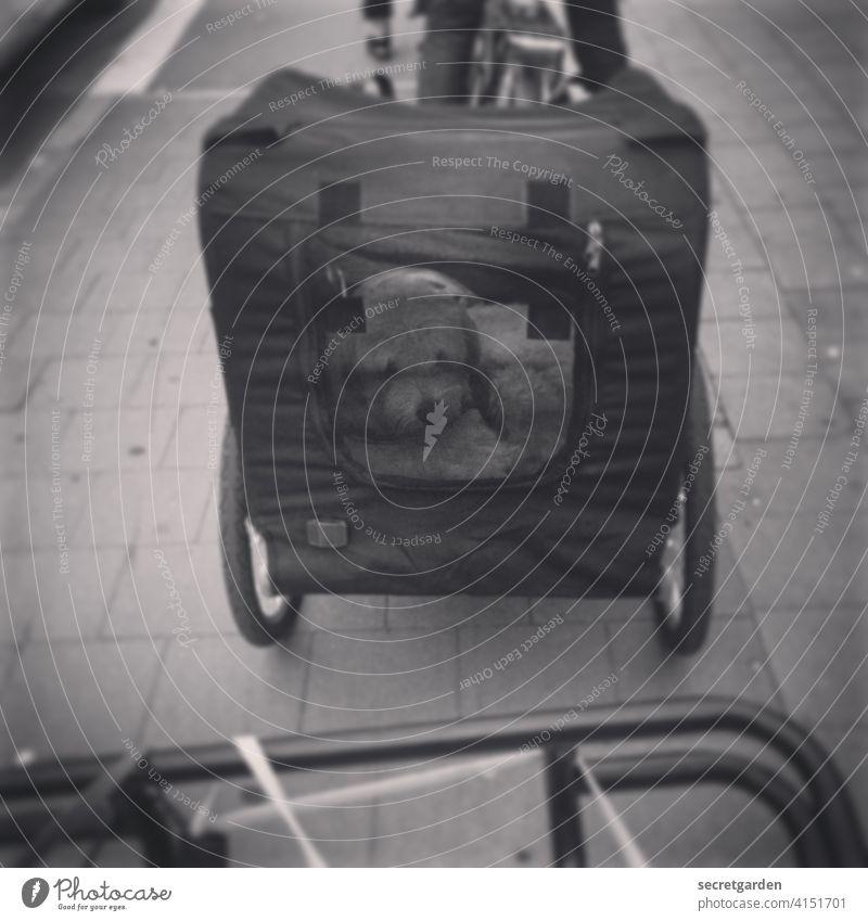 So ein Hundeleben ist schon schwer Fahrrad Fahrradfahren Anhänger Schwarzweißfoto eingesperrt Fahrradtour hinten Fahrradanhänger mitnehmen Anhalter