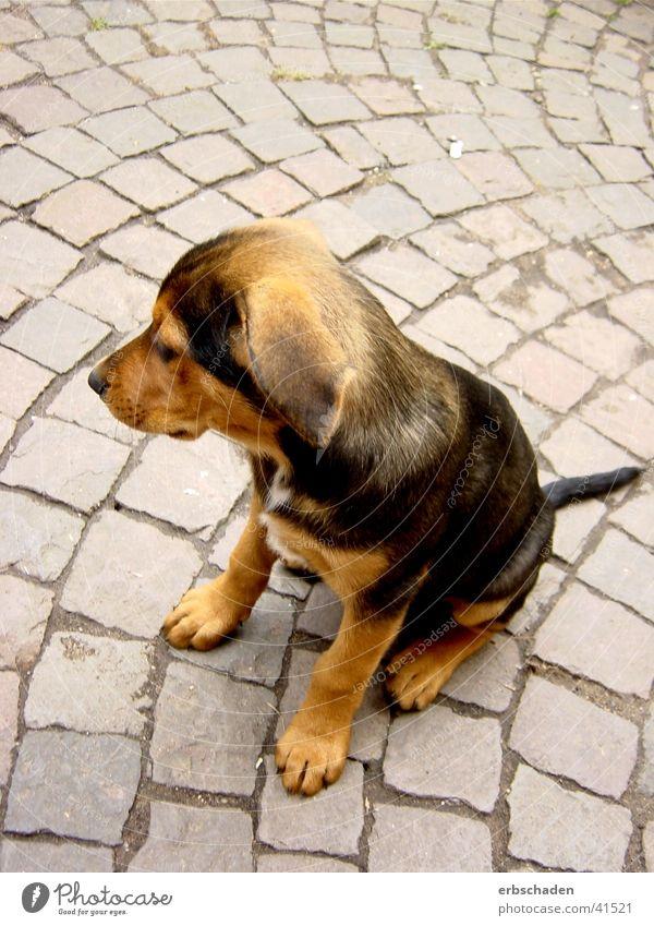 Hundewelpe Sommer Hund braun Bauernhof Fell niedlich Welpe