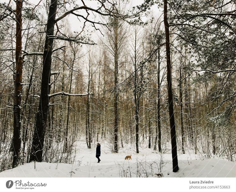 Winterspaziergang im Wald mit dem Hund Spaziergang mit Hund Hundeauslauf Gassi gehen Haustier Landschaft Hund im Wald Waldspaziergang mit dem Hund rausgehen