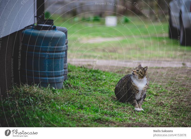 Nachbarskatze Tier Asche Aufmerksamkeit Hintergrund schön Bokeh Katze Nahaufnahme Farbe niedlich Tag heimisch Ohren Auge Fassade Gesicht katzenhaft Stock Fell