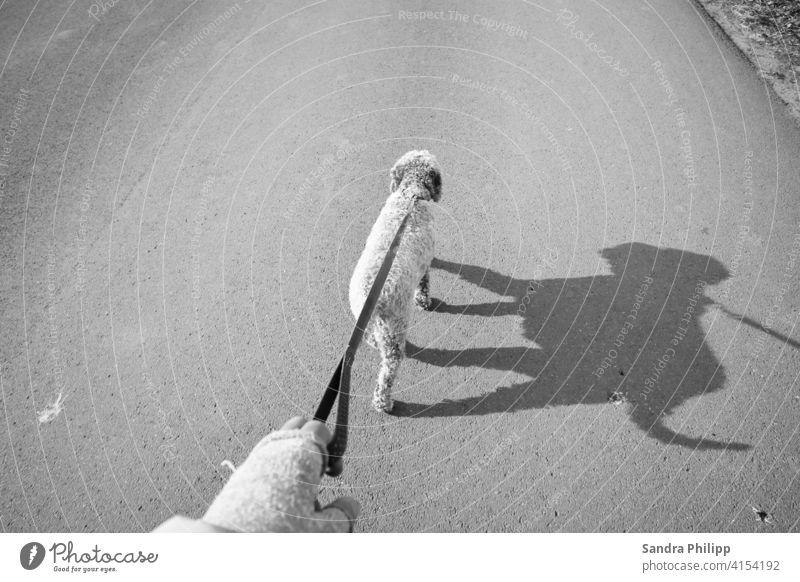 Hund geht an der Leine mit Schattenbild spazieren Haustier Spaziergang Gassi gehen Außenaufnahme Freundschaft Tierwohl Bewegung Schwarzweissfoto Strasse Mensch