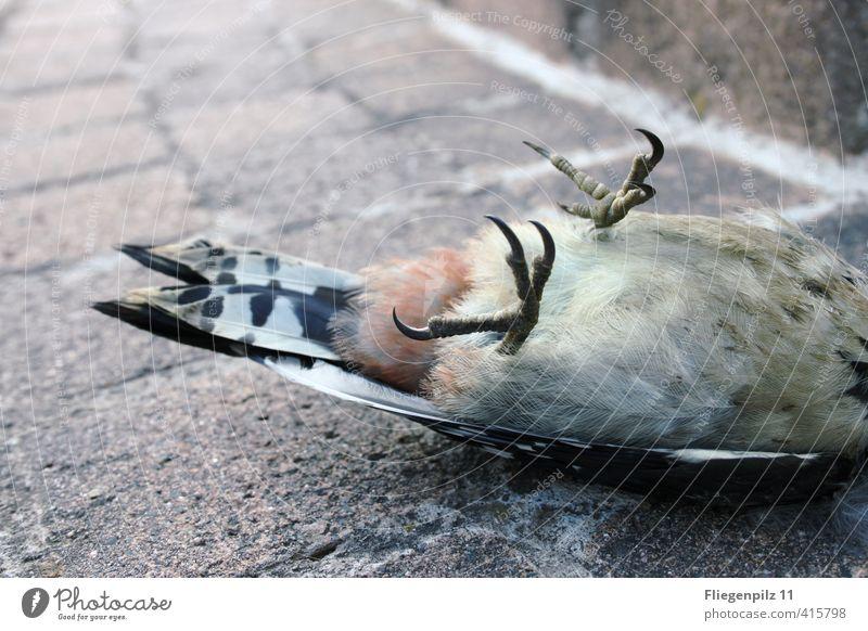 Kältestarre Tier Wildtier Totes Tier Vogel Flügel Krallen 1 ästhetisch kalt Tod Ende Schmerz Traurigkeit Buntspecht liegen Farbfoto Gedeckte Farben