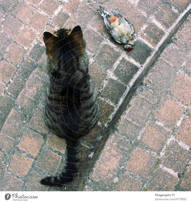 wache Katze Erholung ruhig Tier kalt Tod Stein Vogel Zufriedenheit sitzen Wildtier Erfolg warten bedrohlich beobachten Macht