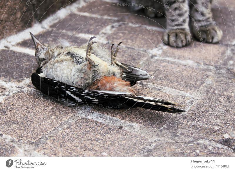Esswahn | keine Chance Katze Tier kalt Tod liegen Vogel sitzen Wildtier bedrohlich Flügel Fell Appetit & Hunger Ende Schmerz Wachsamkeit Jagd
