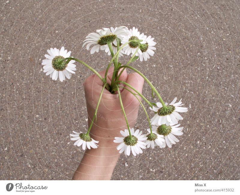 Liebe Grüße Muddi Blume Gefühle Traurigkeit Frühling Blüte Stimmung Blühend Romantik Trauer Verliebtheit Blumenstrauß hängen Sorge Margerite Liebeskummer