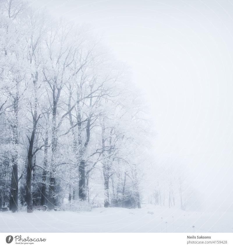 ewige Schönheit der Bäume im Winter unten Gegend Rinde Strahl Birke blau Gesäß hell übersichtlich Tag verblassend Laubwerk Wald Blatt Licht üppig (Wuchs)
