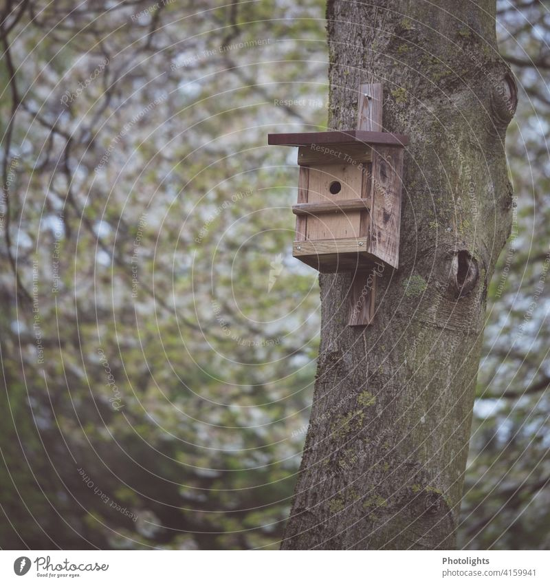 Nistkasten an einem Baumstamm Vögel Vogel brüten Tier Natur Außenaufnahme Frühling Wildtiere Menschenleer Umwelt Farbfoto Meisen Blaumeise fliegen klein Loch