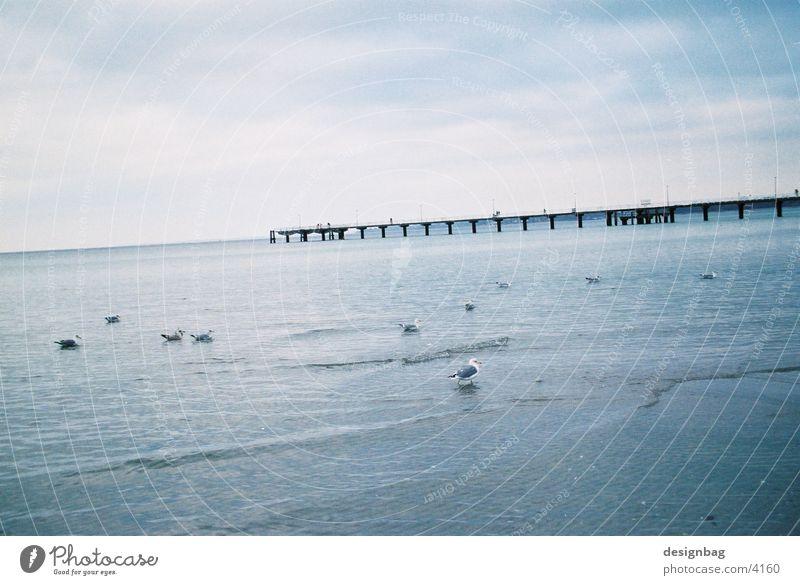Timmendorfer Strand Meer Vogel Europa Brücke
