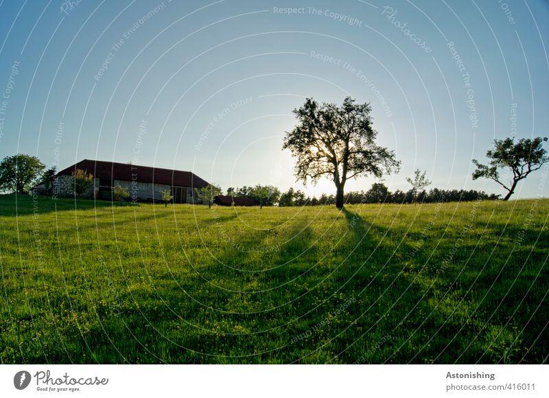 Bauernhof Umwelt Natur Landschaft Pflanze Himmel Wolkenloser Himmel Sonne Sonnenaufgang Sonnenuntergang Sonnenlicht Sommer Wetter Schönes Wetter Wärme Baum Gras