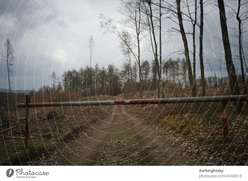 Schranke an einem Waldweg zu einem abgeholzten Forst nach einemBefall durch Borkenkäfer baumstämme Abholzung Zerstörung Waldsterben Umweltschutz Baumstamm Holz