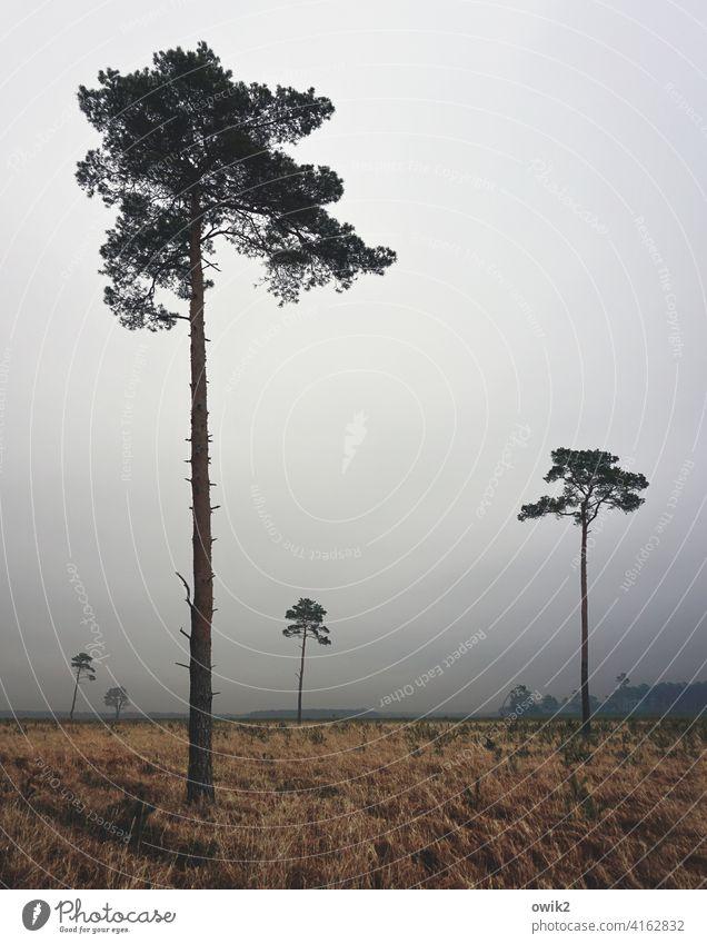 Distanztypen Bäume wenig groß hoch einsam Platz Abstand Einzelgänger Natur Landschadt Wald düster Horizont Textfreiraum oben neblig diesig verhangen