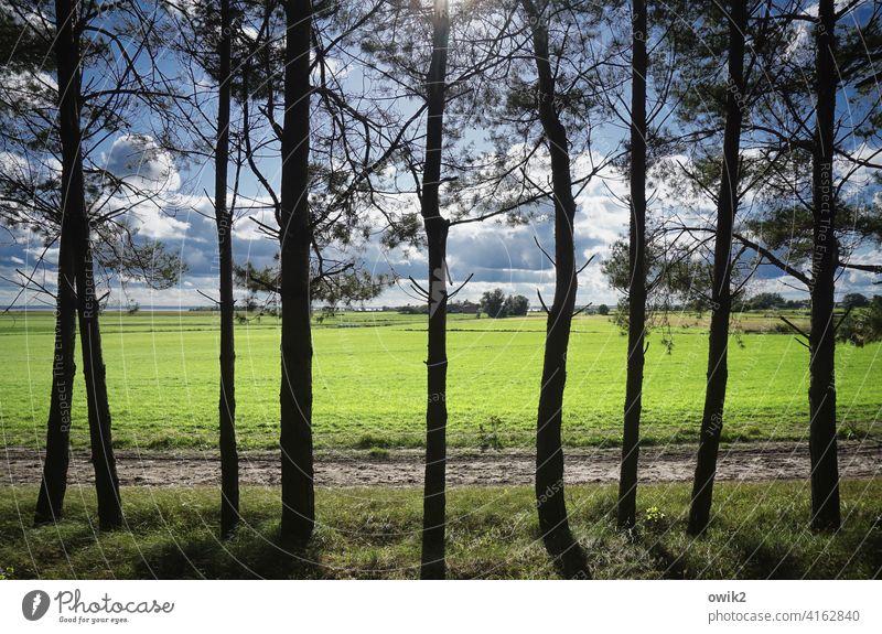 Durchsichtig Baum Idylle Ordnung Menschenleer Farbfoto Außenaufnahme Silhouette Tag akkurat Ordnungsliebe Spalier Gras Wachstum stehen Wege & Pfade Horizont