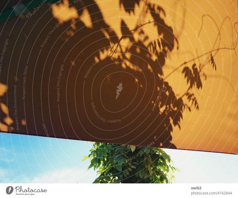 Verplant Schutz Dach Plane Abdeckung Kunststoff Markise Pflanze Baum Schatten Himmel Wolken Baumschatten Zweige Ranken wild Textfreiraum oben Textfreiraum links