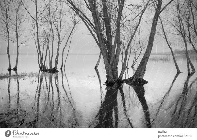 Stillstand Bäume Wasser Land unter Zweige nasse Füße Flut überflutet Überschwemmung Reflexion & Spiegelung Wasseroberfläche Frühling Äste Himmel Horizont