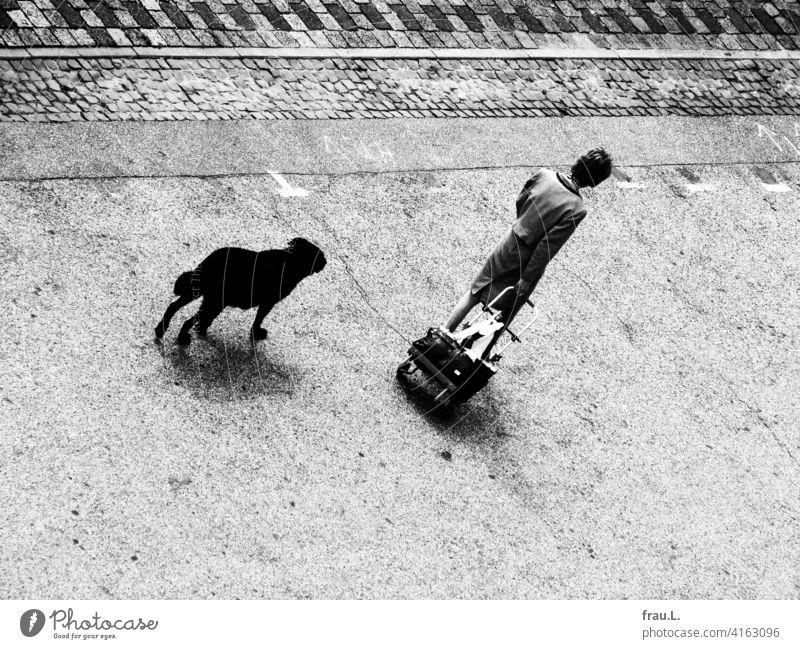 Eine Frau mit Hund und Hackenporsche Kostüm einkaufen shoppen gehen Perücke Straße Platz Spaziergang Haustier