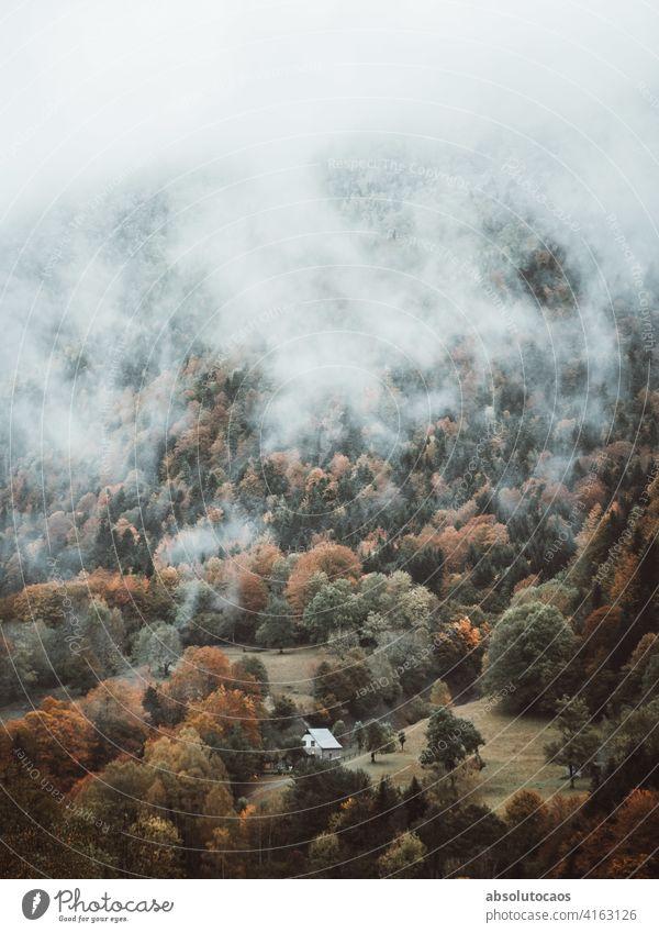 Nebliger Morgen in den Bergen Natur im Freien Abenteuer Wald Berge u. Gebirge Nebel neblig Baum Landschaft Spanien reisen Wetter natürlich Herbst erkunden Szene