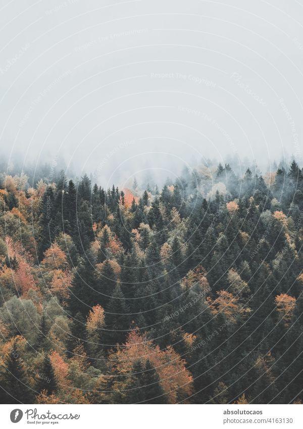 Der Nebel geht durch den Wald Landschaft Natur neblig im Freien Abenteuer malerisch reisen Wetter Ansicht natürlich Morgen Herbst Dunst Szene Park schön Berge