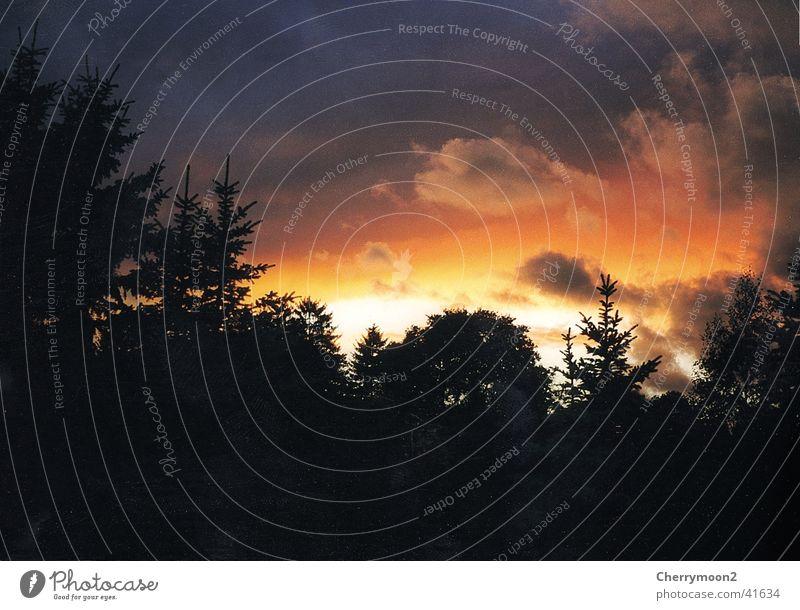 Abendstimmung Sonnenuntergang schwarz rot dunkel Wolken Baum Abenddämmerung orange Schatten
