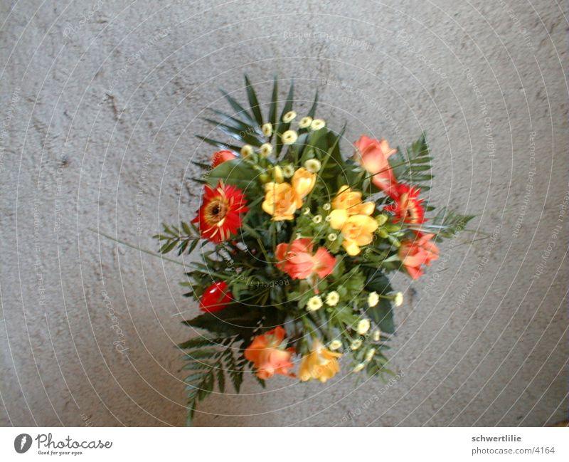 Im Vorbeigehen Blume Teppich