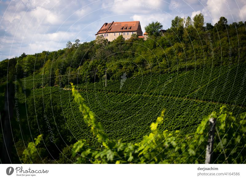 Ganz malerisch liegt die Burg Hoheneck inmitten des Ipsheimer Wein Wanderweg im Naturpark Frankenhöhe. Weinberg Weinbau Menschenleer Herbst Farbfoto grün Tag