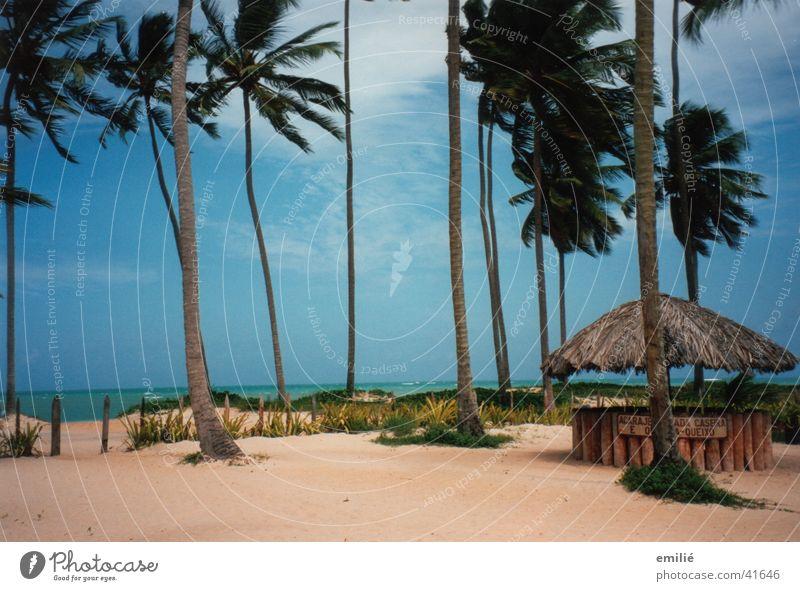 5.30am Strand Palme Meer Wolken Bar Caipirinha Brasilien Südamerika Himmel Sand Stranddüne Maceio Ferne