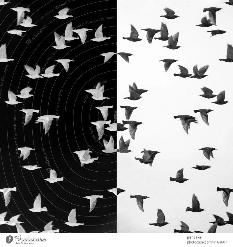 objektiv | spiegelverkehrt Negativ Filmmaterial analog Vogelschwarm Foto Spiegelung schwarz weiss Umkehrung Belichtung Stare Entwicklung positiv Fotografie