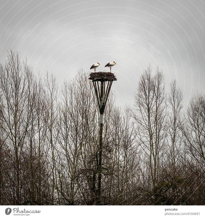 ne, jetzt bist du dran! Störche Storch Nest Storchennest Frühling Nachwuchs hoch bewölkt Bäume düster zwei Paar Vogel Tier Schnabel fliegen Wildtier