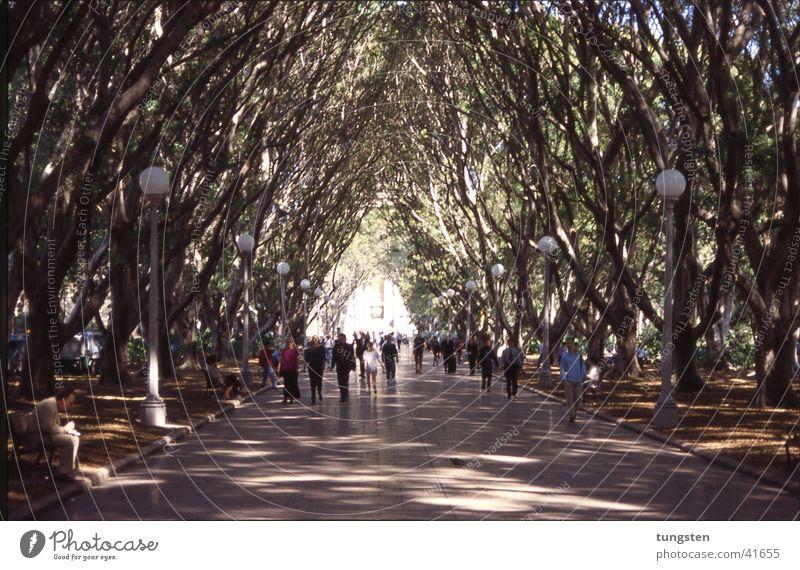 Sydney Hydepark Mensch Ende Tunnel Laterne Australien Allee