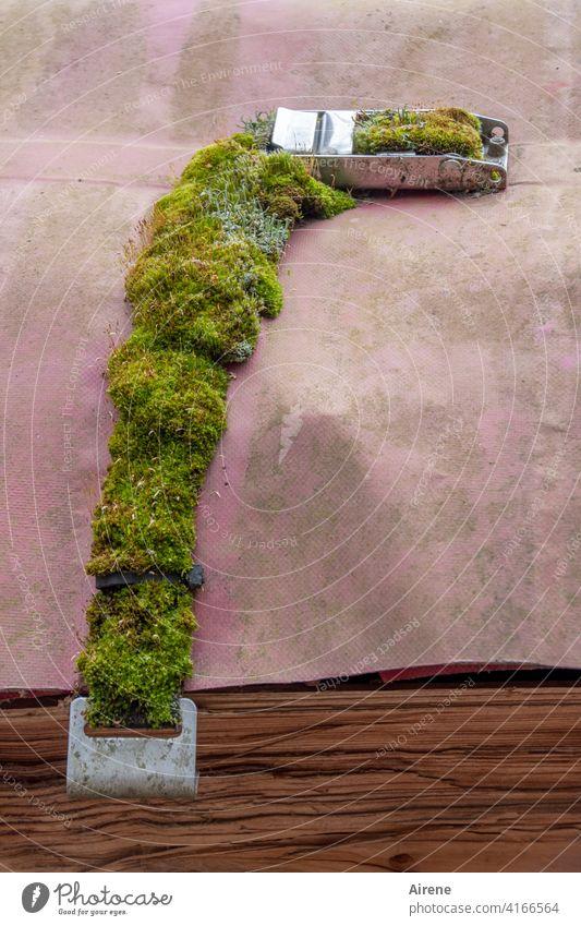 schon länger geschlossen Verrschluss Moos bemoost Plane Gurt Schutzplane zugewachsen festgezurrt Spange grün feucht zugewuchert Abdeckung Gürtel Schnalle