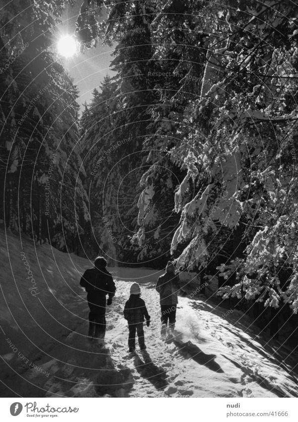 Winter Wunderland Wald Tanne Licht Schnee Sonne Mensch Schatten laufen Spaziergang