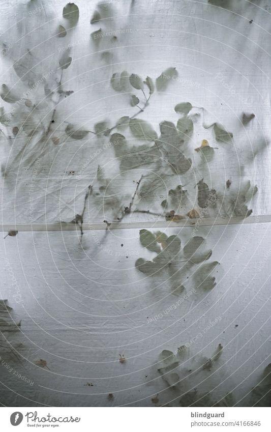 Spooky leafs ...  wet tent contest Zeltplane Baum Regen Blätter Niederlassungen Unwetter Gewitter Stoff nass Damp schlechtes Wetter Farbfoto Außenaufnahme