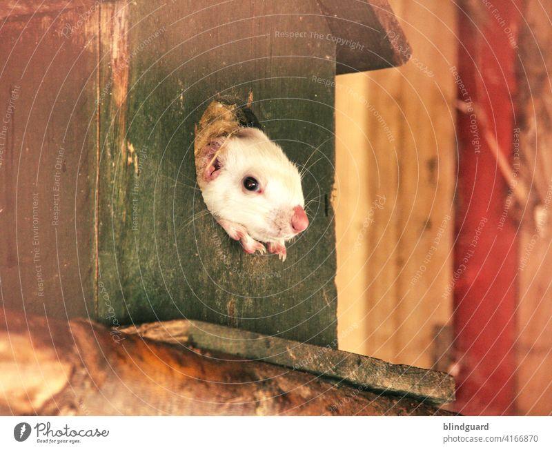 Da guckt die Maus aus ihrem Haus raus ... weil sie Angst vor dem Virus hat wird sie mittags nicht mehr satt ... denn aus Angst verlässt die Maus nie mehr ihr Haus