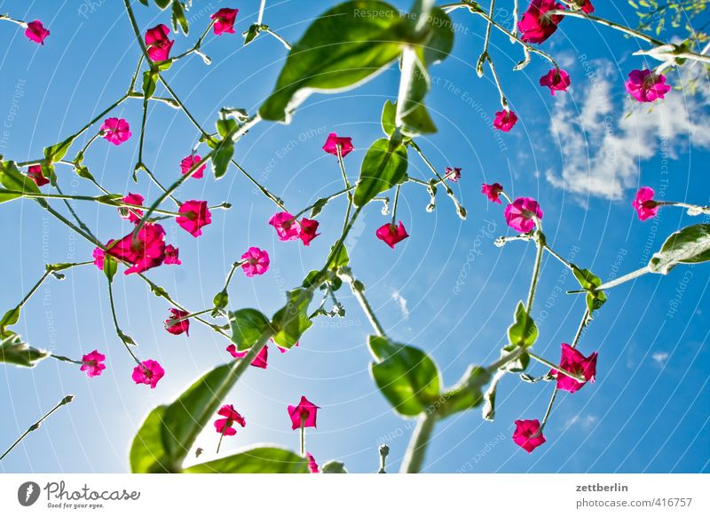 Hüpfende Rapskatze Himmel schön Pflanze Sommer Sonne Erholung Blume Freude Blatt Gefühle Blüte Glück Garten Zufriedenheit Fröhlichkeit Lebensfreude