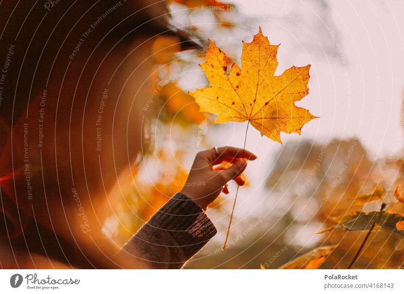#A9# Im Herbst am Festhalten eines gelben Blattes Außenaufnahme Herbstwetter Herbstlaub wandern positiv Spaziergang Haare & Frisuren draußensein erleben Natur