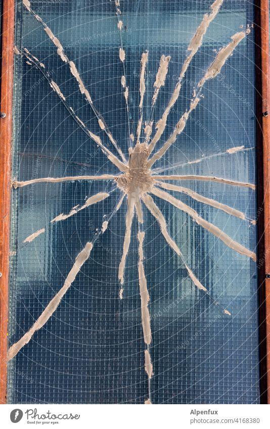 Tarantula Spinne Spinnennetz Glasscheibe glasbruch Farbfoto Nahaufnahme Fensterscheibe Menschenleer Außenaufnahme Zerstörung Scherbe Detailaufnahme gebrochen