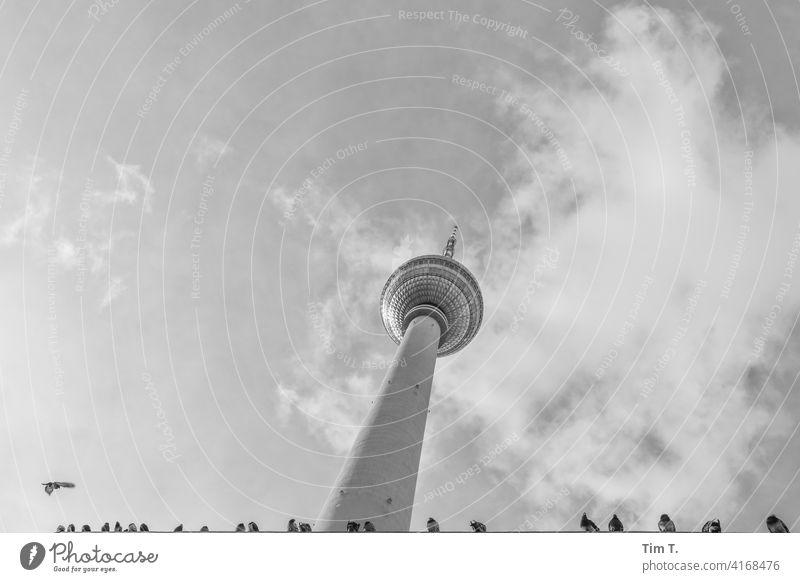 der Fernsehturm mit ner Reihe Tauben Alexanderplatz Berliner Fernsehturm bird Vogel Wahrzeichen Turm Himmel Architektur Hauptstadt Sehenswürdigkeit Berlin-Mitte