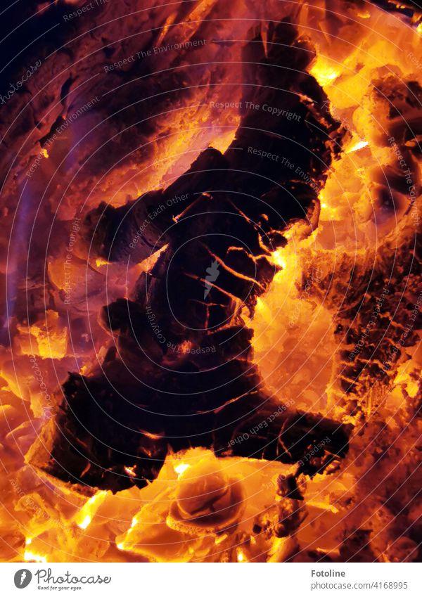 Seht ihr in den Flammen auch den grimmig guckenden Gnom? Feuer heiß brennen Brand Wärme Holz Glut Feuerstelle orange gefährlich schwarz Außenaufnahme gelb Licht