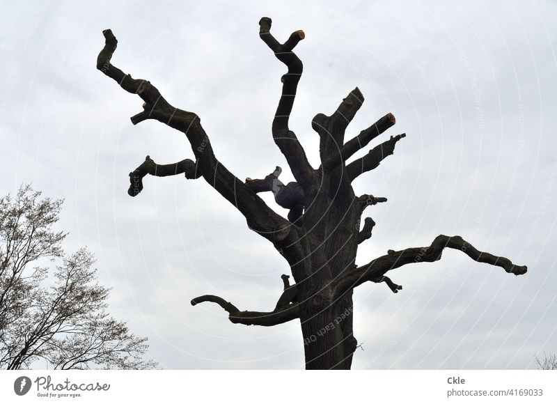 Kahle Bäume kahl kahle Bäume Äste Baum Natur Winter Herbst Umwelt Außenaufnahme Wald Menschenleer Himmel kalt Landschaft Pflanze Zweige u. Äste Ast