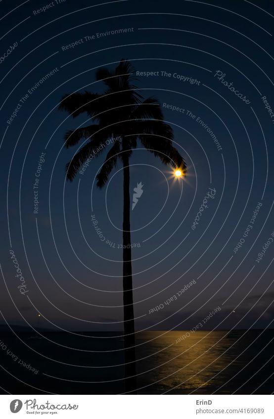 Vollmond am Rande der Palme Frond Silhouette wie Ohrring mit Glow auf Ozean Ohrringe glühen Meer Meereslandschaft Mond Horizont Stimmung Reflexion & Spiegelung