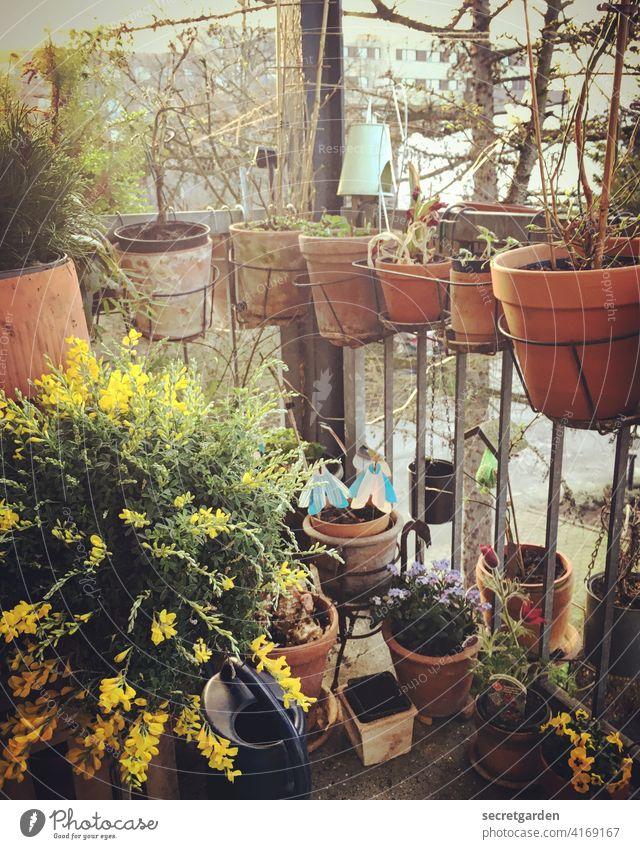 im Flow Tontopf Frühlingsgefühle Sommertag Terrakotta eifrig sommerlich Sommerblumen sähen Vogelperspektive Sammelsurium Blühend eng Platzangst Schrebergarten