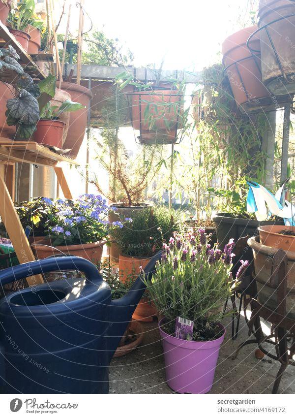 Der Sommer, der Sommer und du, das gehört dazu. duftend riechen Duft Froschperspektive Idylle idyllisch Oase urig Terrakotta Vergißmeinnicht Lavendel Blüte